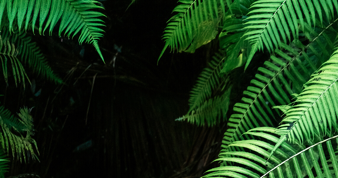 Green plant in tropical climate dark vertical background, Bali, Indonesia